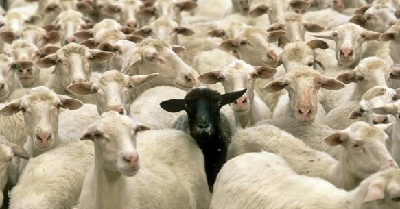 vantagens-de-ser-ovelha-negra-da-familia